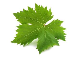 vine leaf Wall mural