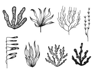 seaweed vector sketch icons isolated silhouette