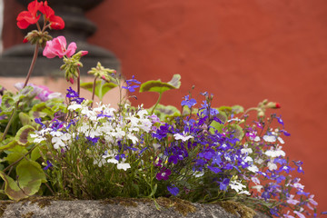 Pretty rockery plants against a terracota wall.