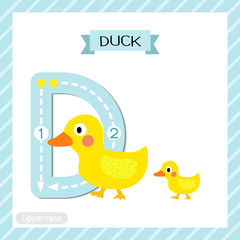 Letter D uppercase cute children colorful zoo and animals ABC alphabet tracing flashcard of Duck and child for kids learning English vocabulary and handwriting vector illustration.