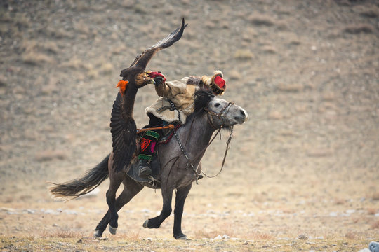 Mongolia, Golden Eagle Festival.Rider On A Gray Horse With A Magnificent Golden Eagle, Spreading His Wings And Holding Its Prey.Hunter On Horseback, A Traditional Kind Of Mongolian Hunting.