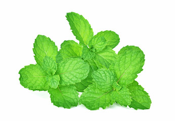 mint leafs herb. isolated on white background