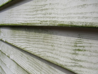 Close up of mold and mildew on house siding