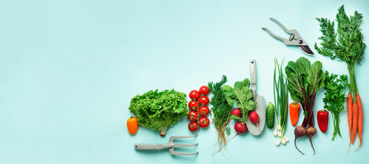 Organic vegetables and garden tools on blue background with copy space. Banner. Top view of carrot, beet, pepper, radish, dill, parsley, tomato, lettuce. Vegan, eco concept