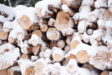 Trees for forestry in winter