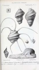 Illustration of fossils