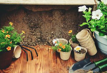 Garden vegetable garden and flowers. Selective focus.