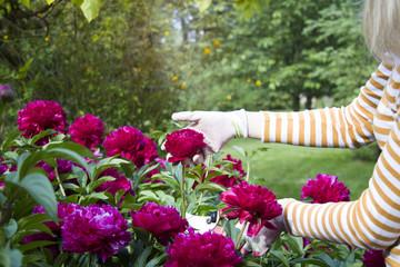 A girl cutting flowers in the backyard.