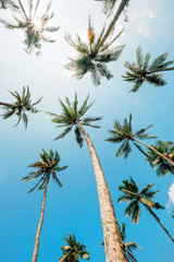 Palm trees top in sunny sky