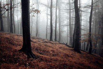 Gruseliger Wald mit Nebel