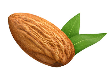 One Almond isolated closeup without shell with leaf as package design element on white background. Nut macro concept