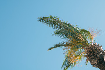coconut trees and a beautiful sky with a soft focus and above the light in the background.