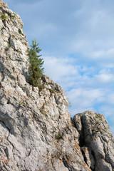 Rabsztyn zamek okoliczne skałki z iglakiem