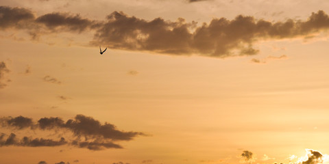 Couple of flying doves birds in the sky at sunset