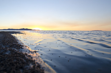 The cool calm waves on the bug filled shoreline in the evening sun at the great salt lake utah.