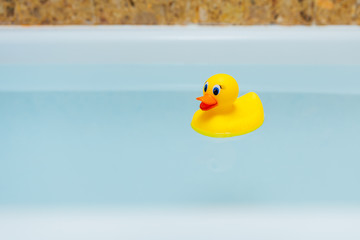 yellow rubber duck in blue water of bathtub