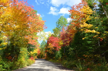 Scenic fall view of colorful forest, Ontario, Canada