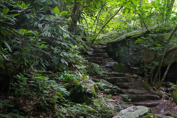 Stone Steps in Nature - Stairs on a Hiking Trail in the Forest in Virginia Surrounded by Lush Foliage beside a River