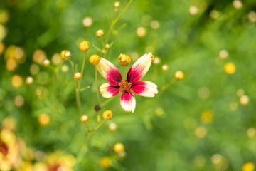 Macro flower in garden