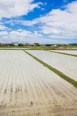 田植え直後の水田