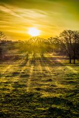 Sunrise Sunrays
