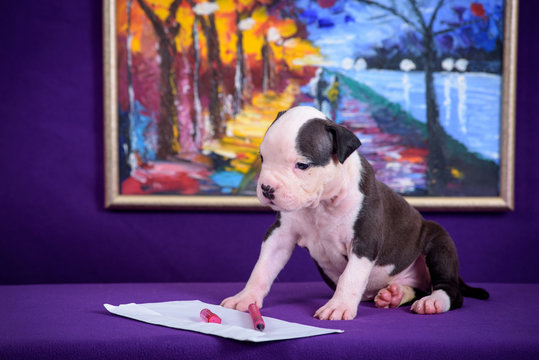 Puppy Terrier on a purple background, on the wall picture.
