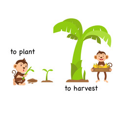 Opposite to plant and to harvest vector illustration