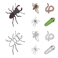 Arthropods insect mosquito, bee.Earth worm, caterpillar,vermicular set collection icons in cartoon,outline style vector symbol stock isometric illustration web.