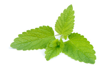 Lemon Balm (Melissa Officinalis) Isolated on White Background