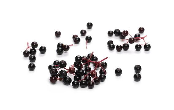 Elderberries isolated on white background, (Sambucus nigra)