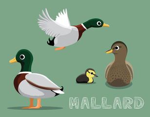 Mallard Cartoon Vector Illustration