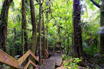Lush green forest in New Zealand