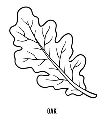 Coloring book, Oak leaf