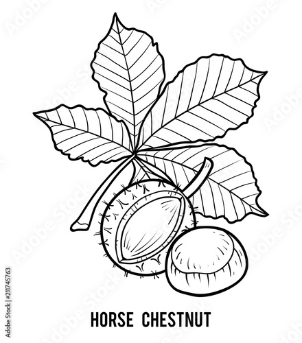 chestnut tree leaf coloring pages - photo#18