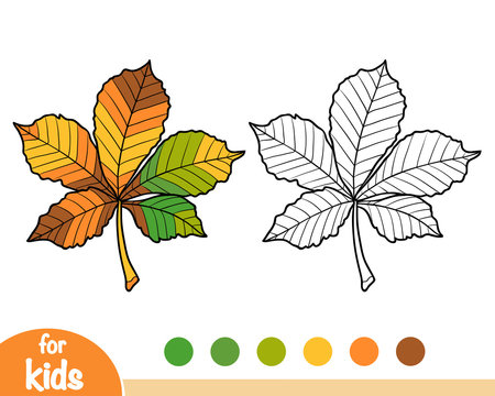 Coloring book, Horse Chestnut leaf