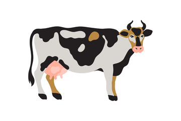 Milk spotted cow in black, white, gray, gold and pink. Agriculture, farming, village life. Pet. Vector illustration.