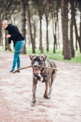 a big dog playing happily in the park