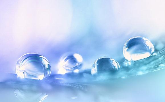 Beautiful large transparent water drops or rain water on blue purple turquoise soft background, macro. Elegant delicate artistic image nature.
