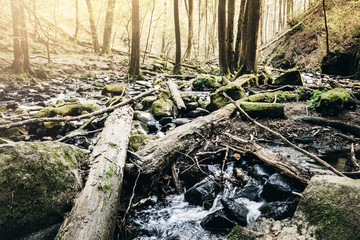 low angle view of creek in natural untouched forest