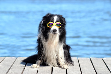 dog posing on the pier by the water with sunglasses