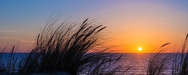 Printed kitchen splashbacks Sea sunset Sunset on atlantic ocean, beach grass silhouette in Lacanau France
