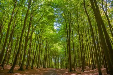 Buchenwald in Nationalpark Jasmund bei Sassnitz auf der Insel Rügen