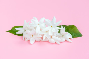 White Jasmine flowers with green leaves on beautiful pink background with copy space for text insertion, sweet cute concept for Valentines day, Mother's day or special love event concept