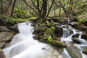 Garden Poster Forest river Arroyo fluye entre rocas y árboles en la ladera de una montaña