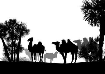 camels and palm trees  isolated on white