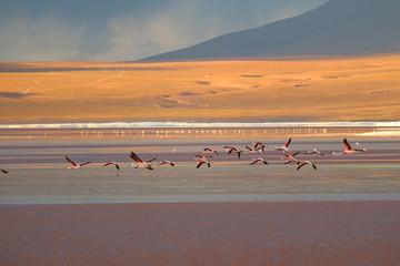 Group of flamingo flying on Laguna Colorada (Red Lagoon), the salt lake at altiplano plateau in Potosi, Bolivia