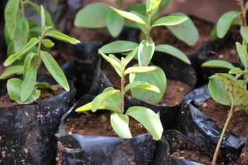 植物 自然 植林 緑 苗 成長