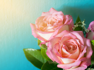 Pink roses on the blue background and morning sun