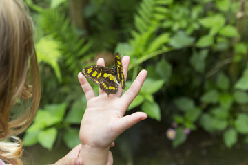 Yellow Spotted Butterfly on a Child's Hand