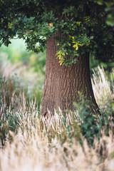 Tree trunk between tall yellow grass.